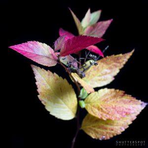 Nature - VII