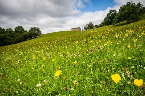 Wharfdale Flower Meadow