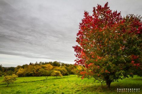 Colours of the Arboretum